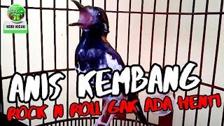 Anis Kembang Gacor Ngeplong Istimewa | Suara Burung