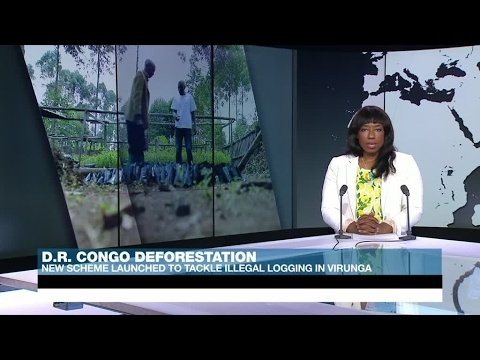 New scheme launched to tackle illegal logging in DR Congo