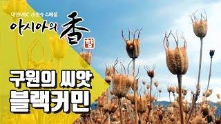 구원의 씨앗 블랙커민, 중동의 향신료 - 지역 MBC 공동기획 아시아의 향 2부 Spices of Asia 02 Middle East [제작/광주MBC]