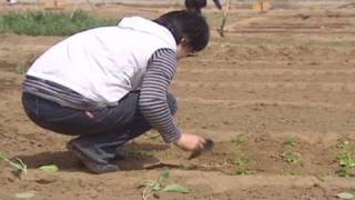 Organic farming takes off in China