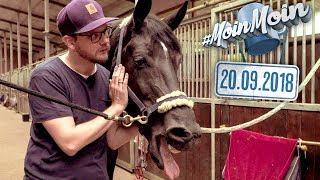 Reiten lernen und Pferde zähmen | MoinMoin mit Etienne und Florentin auf dem Reiterhof