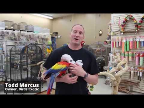How many different kinds of parrots are there?