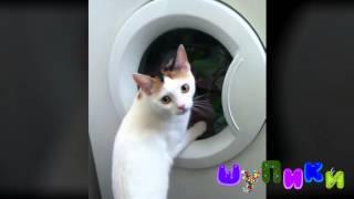 Шупики. Котяка крутяка. Кошка и стиральная машина. Зачем коты это делают?
