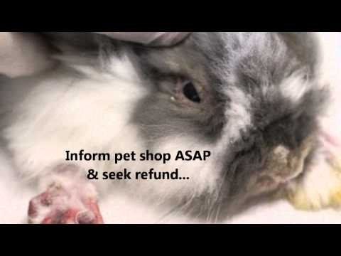 Lemon Law for defective/diseased pets in Singapore