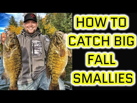 Live Bait Rigging BIG FALL SMALLMOUTH - How To Catch Them