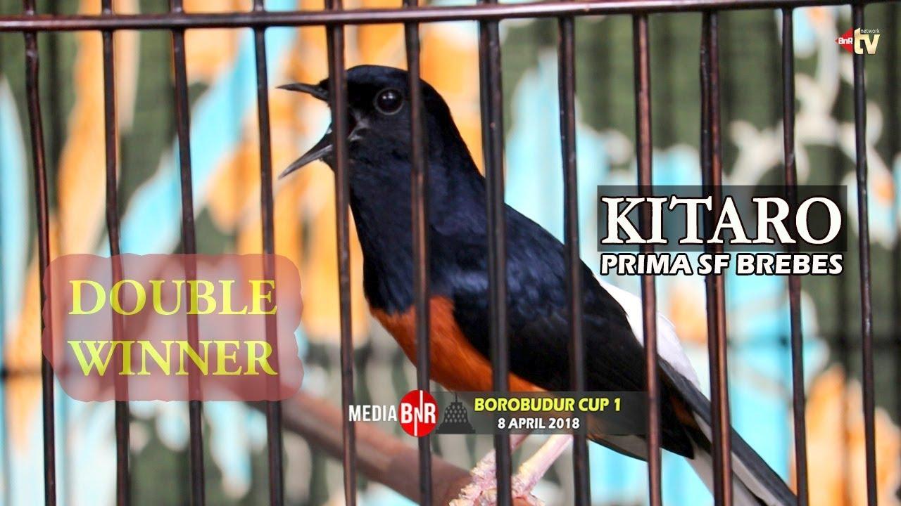 Borobudur Cup I Murai Kitaro Kembali Menggebrak Langsung Buka Kemenangan Juara 1 Youtube