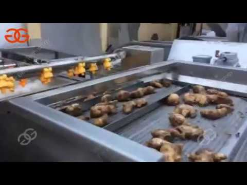 fresh ginger washing cleaning and cutting line