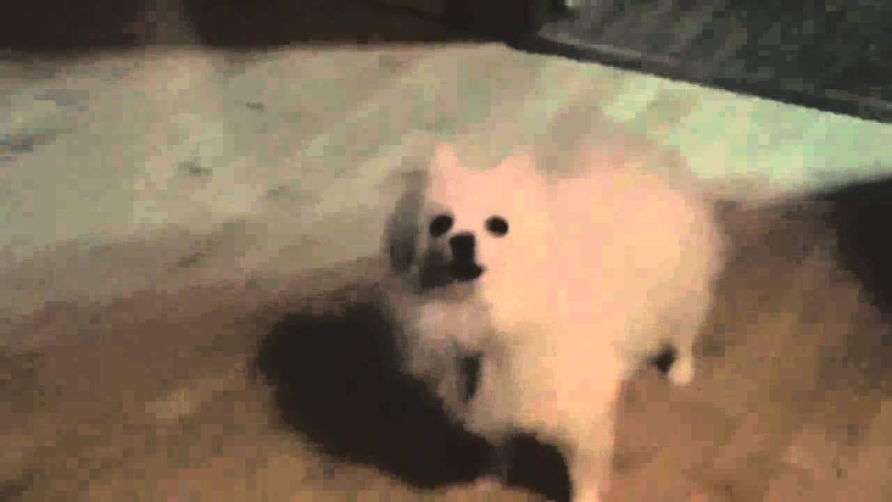 original doge meme gif