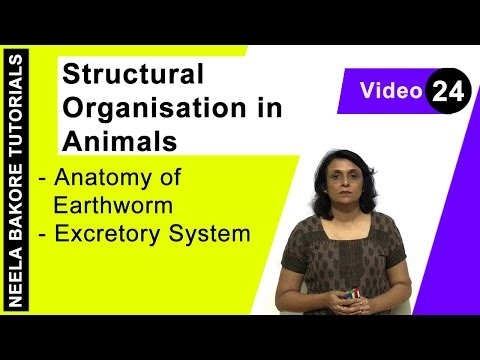 Structural Organisation In Animals - Anatomy Of Earthworm - Excretory System