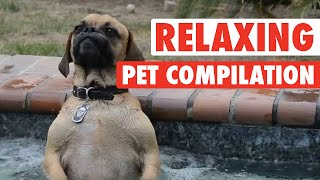 Funny Pet Massages || Pets Take A Spa Day