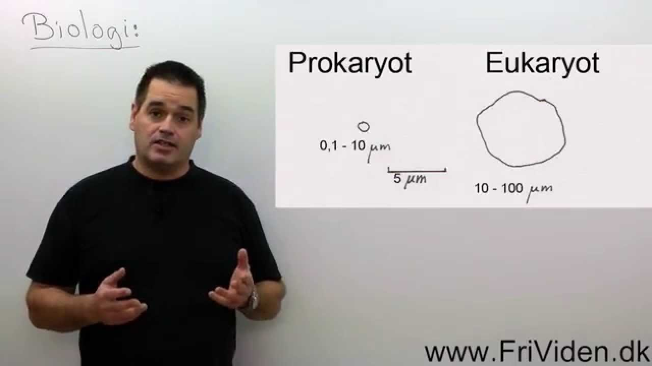 prokaryoter