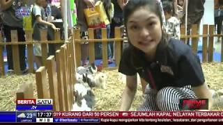 Tema Indonesia Pet Show 2019 Ingatkan Pemilik Serius Merawat Hewan Peliharaan