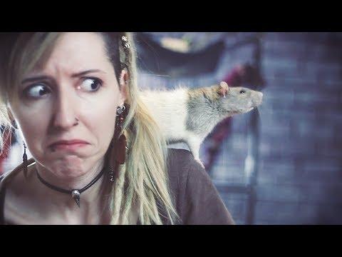 Hay ratas en mi casa 🐀