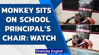 Monkey occupies school principal's chair in Gwalior  Watch the funny video   Oneindia News