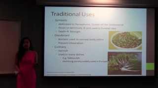 Petroselinum crispum (Parsley)