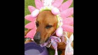 Haute Dog Easter Parade   Long Beach, Calif.