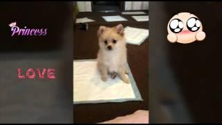 Моя первая собака Персей ♡ 😊🐶