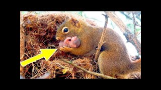 A squirrel begged a man to help her baby, who was in trouble