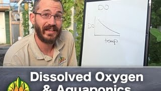 Aquaponics & Dissolved Oxygen: The Basics