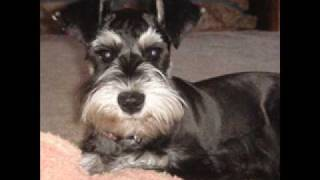 Charlie Douglas - The Dog Show