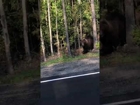 ОПАСНО! Не повторять! Встретил Медведя лицом к лицу!