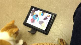 Cat Painting In Meow Manor At Rover Oaks Pet Resort