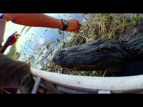 Miami Everglades, Florida - Buffalo Tiger Airboat Tours