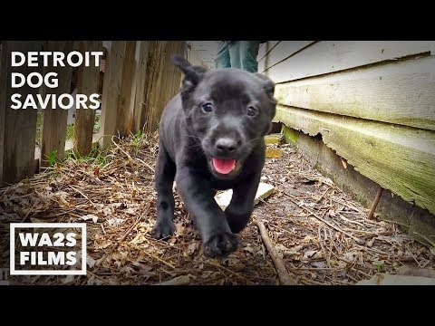 This Stray Dog Acting Weird Saves Puppies & Injured Mama After Owner Dies: Ep #2 Detroit Dog Saviors