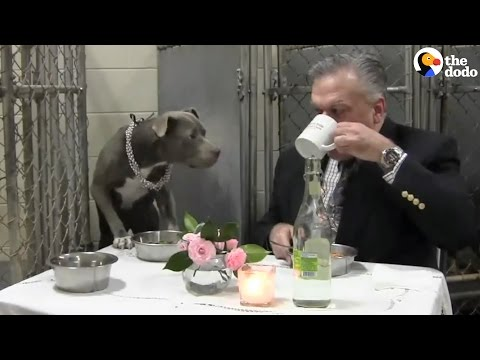 Vet Eats Fancy Dinner with Favorite Dog | The Dodo