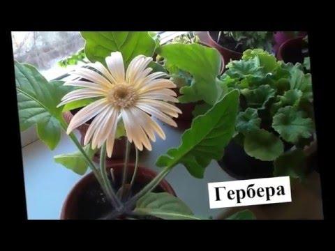 Каталог цветов названия и фото, описание цветов, виды и