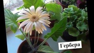 Лучшие комнатные цветы  Названия  красивых цветов и их фото(Специально для любителей комнатных цветов здесь собраны наиболее популярные растения, цветущие на подоко..., 2016-01-25T08:21:32.000Z)