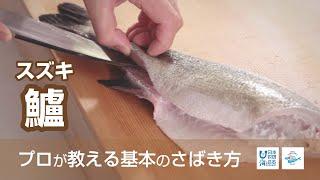 鱸(すずき)のさばき方 - How to filet Japanese Seaperch - 日本さばけるプロジェクト