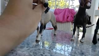 Имена нескольких моих лошадей