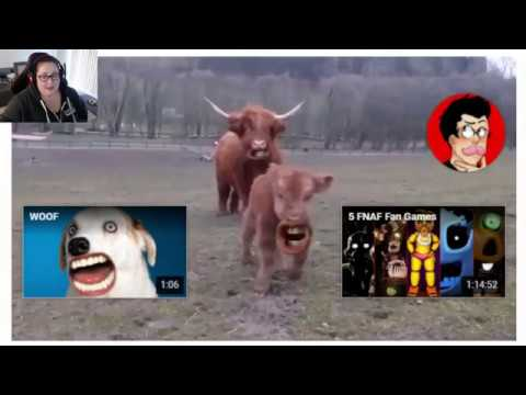 Professional Idiot Loses Her Mind  |  Cow, Woof, Meow Markiplier