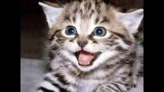Os Gatos Mais Engraçados e Fofos...