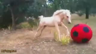 Смешные животные. Лошадь играет с мячом. Приколы с лошадьми. Funny animals