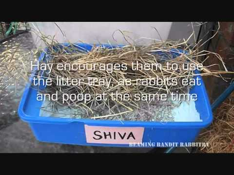 How to litter train your rabbit - YouTube