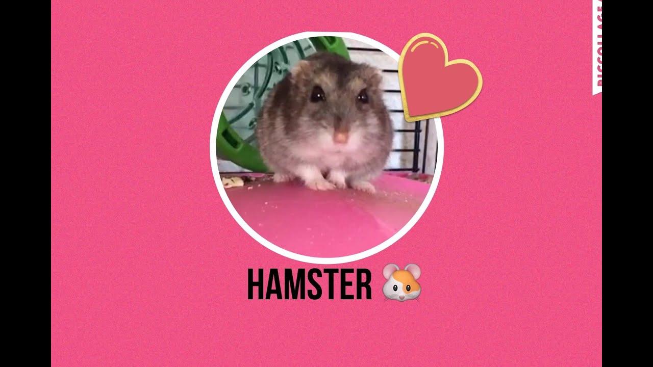 Voor mijn hamster vriendjes 5