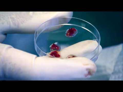 What Does Human Flesh Taste Like? - Secrets of Everything - Brit Lab