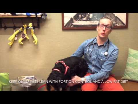 Happy, healthy senior pets! Tips from your holistic vet for old cats and dogs