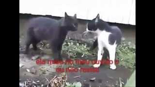 Briga de Gatos Legendada