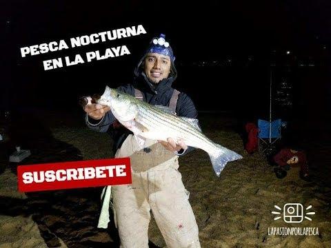 COMO PESCAR DE LA PLAYA  (Surf-fishing)