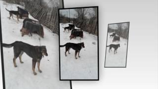 Собачий приют Волжский деревянный