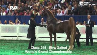 CH Callaway's Annabel Allison Wins the 5-Gaited Grand Championship at #WCHS