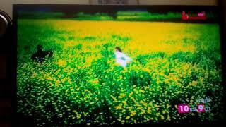 فيلم شاروخان رجوع العاشق المجنون كامل مدبلج يوتيوب