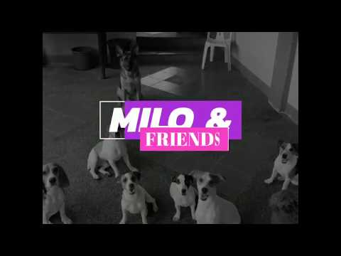 Milo and Friends Trick Dogs