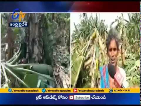 100 Acres of Banana Crop Damaged | From Cyclone Fani | at Vizianagaram Dist