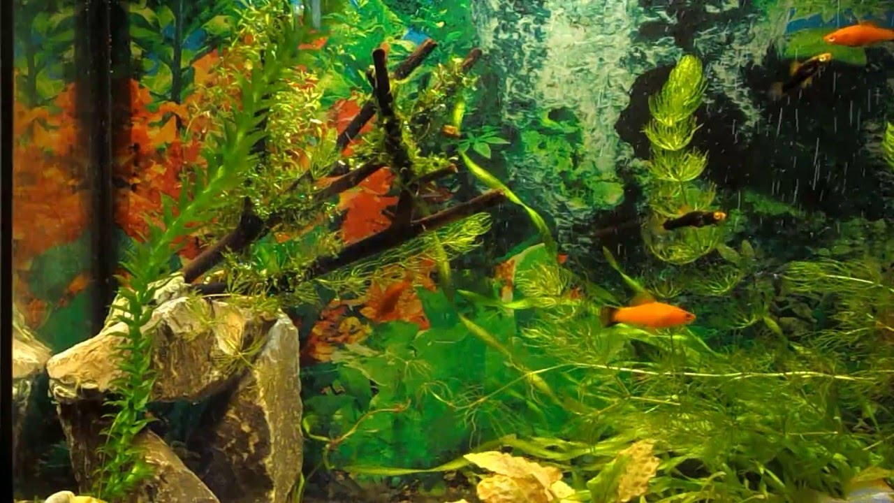 Как сделать грот в аквариум фото 330