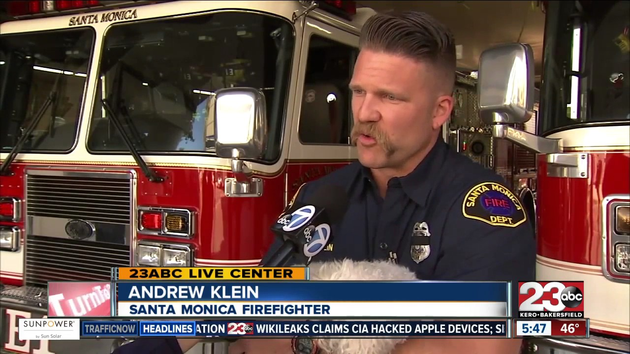 firefighter saves dog