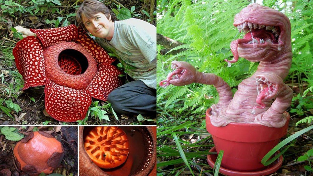 نباتات متوحشة وفتاكة بالبشر| حقيقة اغرب من الخيال